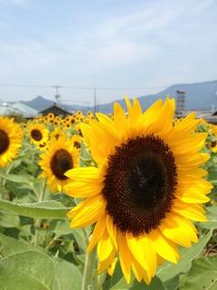 写真 2013-08-09 12 21 11.jpg